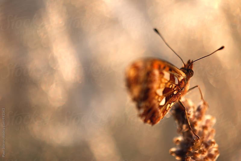 Butterfly on grass by Pixel Stories for Stocksy United