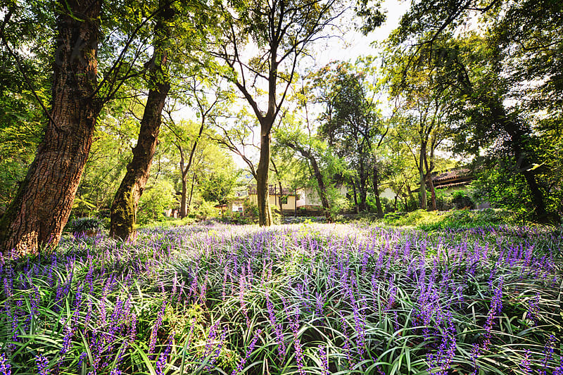 Hangzhou - Meadow at Yong Fu by Andy Brandl for Stocksy United