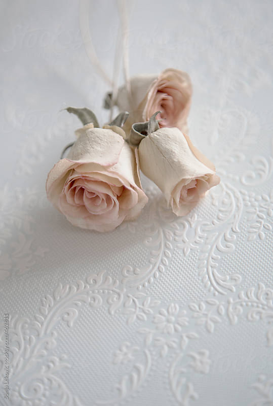 three white roses on white decorative background by Sonja Lekovic for Stocksy United