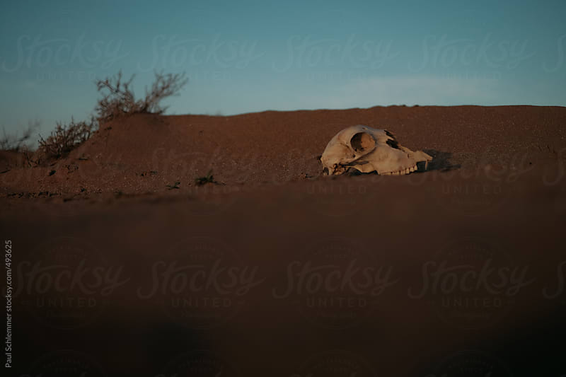 wasteland skull by Paul Schlemmer for Stocksy United