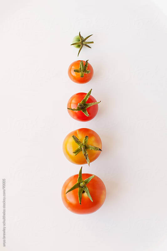 Simple image of a row of five small tomotoes in a row by anya brewley schultheiss for Stocksy United