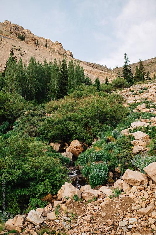 Montana Wilderness by Jessica Byrum for Stocksy United