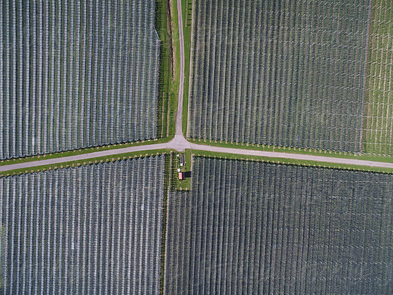 Aerial view of hail nets on apple orchards by rolfo for Stocksy United
