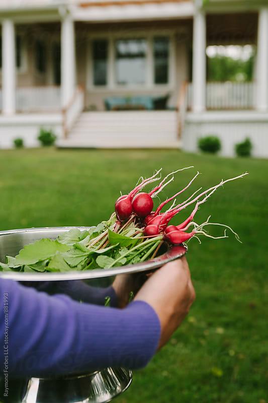 Backyard Farming for radish by Raymond Forbes LLC for Stocksy United