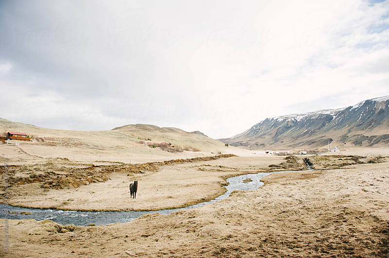 Icelandic Landscapes by Daring Wanderer for Stocksy United