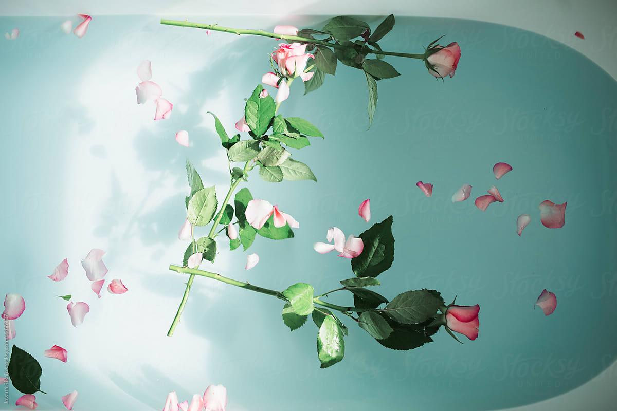 Roses In A Bathtub | Stocksy United