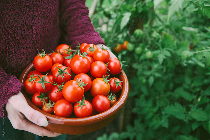 Woman holding bowl full of freshly picked tomatoes by kkgas for Stocksy United