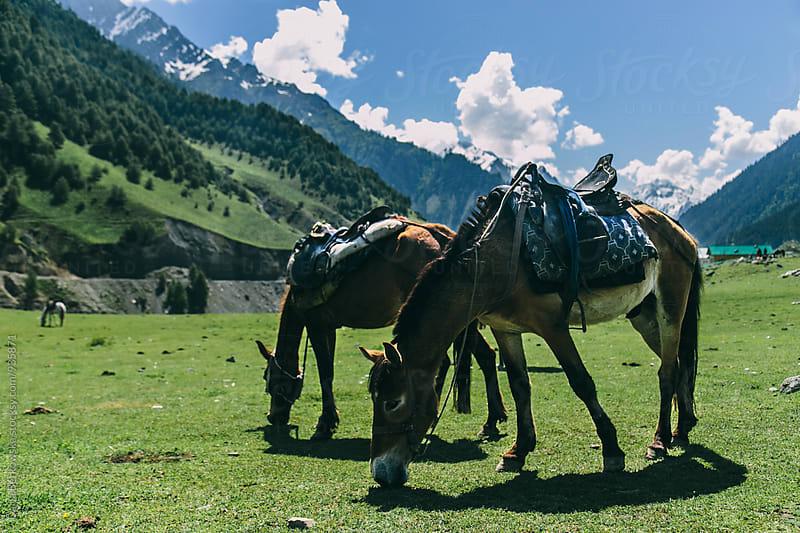 Horses in Kashmir, India by Daria Berkowska for Stocksy United