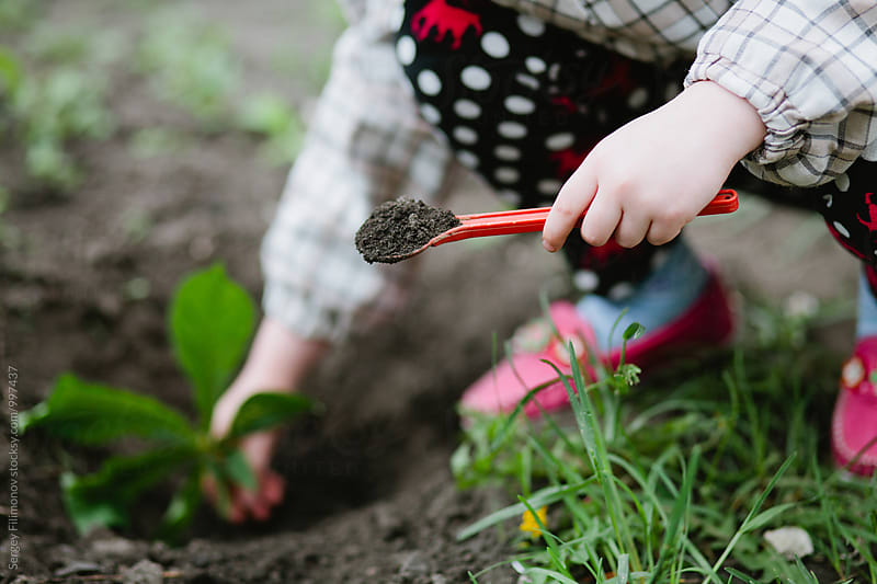 hand of a little girl to put plants in the garden by Sergey Filimonov for Stocksy United