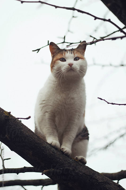 Cat on a tree by Jovana Rikalo for Stocksy United