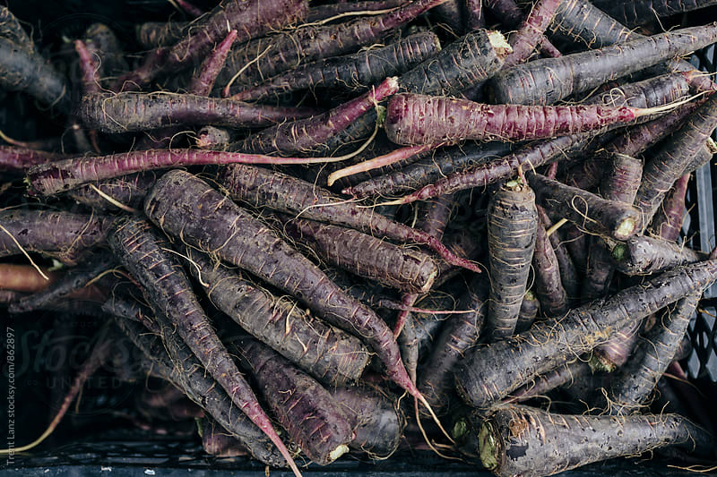 Farmers Market pile of fresh organic purple carrots by Trent Lanz for Stocksy United