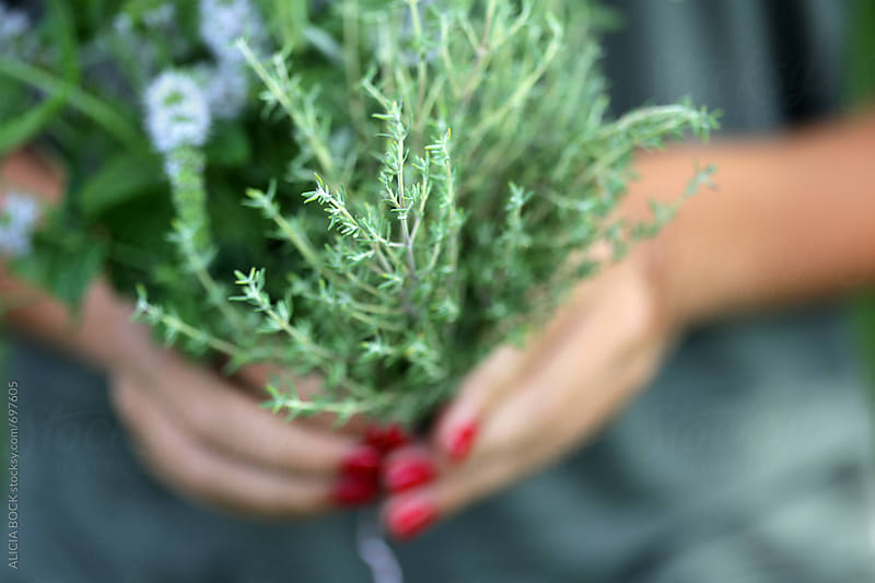 A Womans Hands Holding A Bouquet Of Freshly Picked Herbs Including Mint, Thyme and Rosemary by ALICIA BOCK for Stocksy United