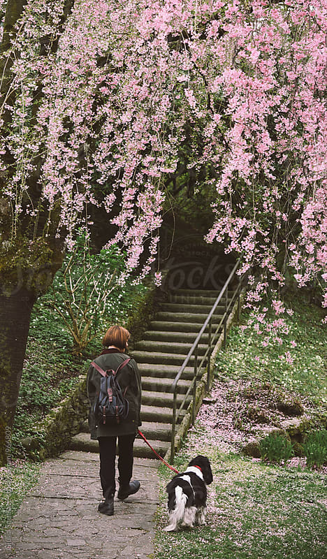 Young woman and dog walking under a pink blossom tree by Giulia Squillace for Stocksy United
