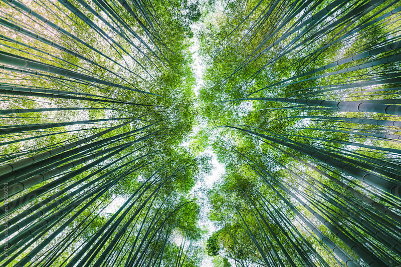 arashiyama japanese bamboo forest, Kyoto, Japan by Juri Pozzi for Stocksy United