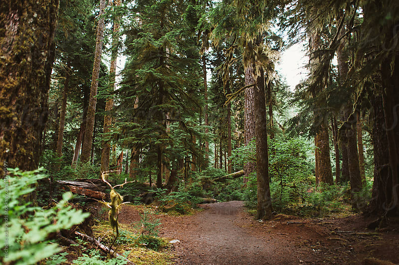 Olympic National Forest/Park Landscape/Trail in Washington by michelle edmonds for Stocksy United