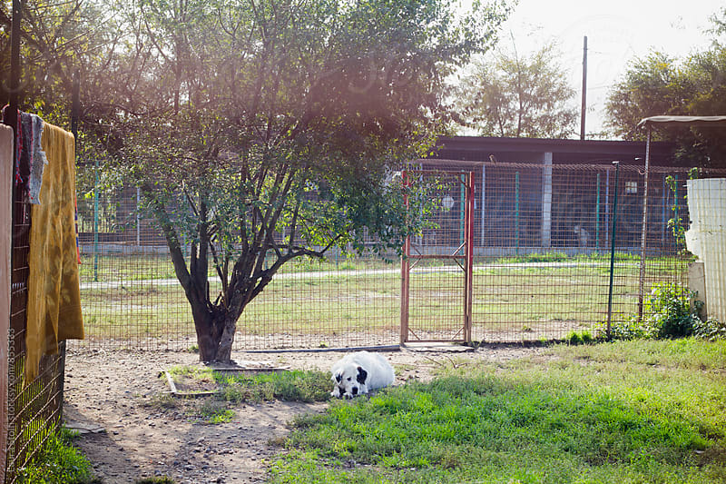 Sheep dog laying on turf seen behind fence by Laura Stolfi for Stocksy United