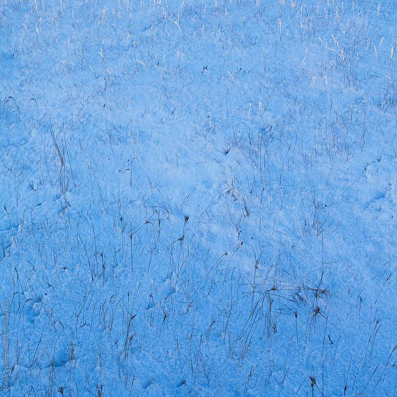 Snow & Herbs by Marilar Irastorza for Stocksy United