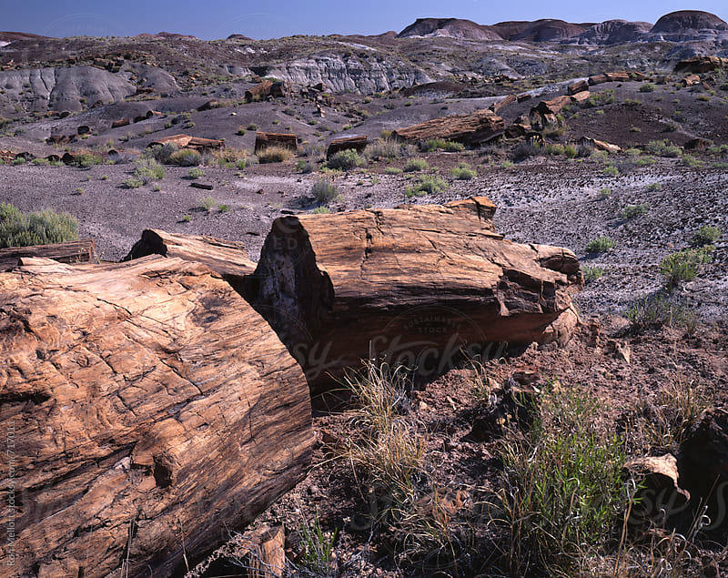 Petrified trees petrified forest Arizona Southwest ancient fossilized fossils by Ron Mellott for Stocksy United