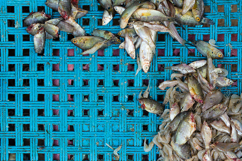 Fish at the Market by Nicole Young for Stocksy United