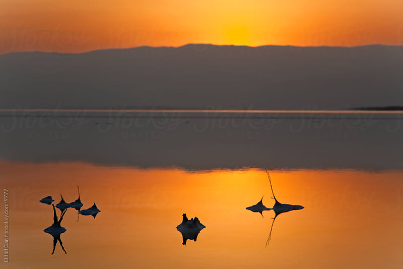 Dead Sea Sunrise - Salt Stems at Dawn by Eldad Carin for Stocksy United