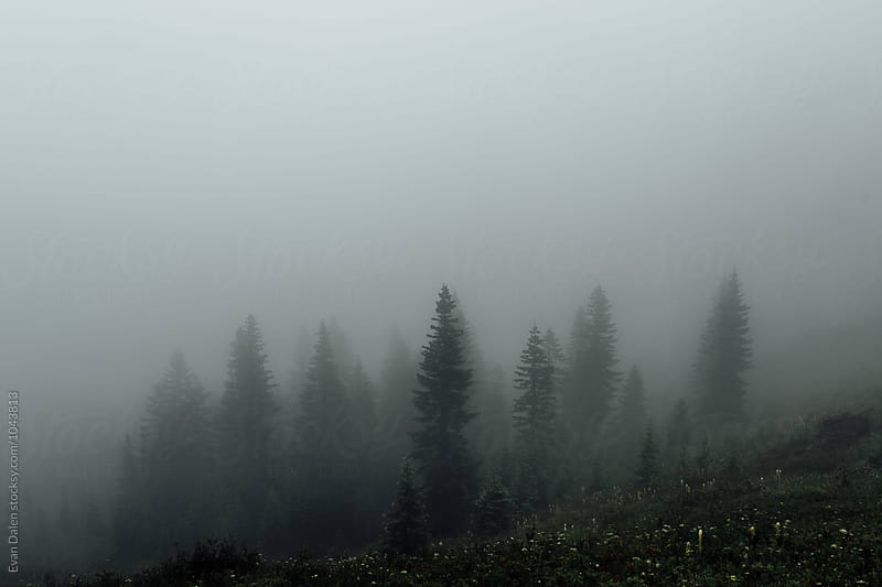 Dark Forest in Fog by Evan Dalen for Stocksy United