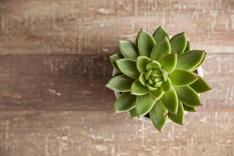 Succulent by Jon Rodriguez for Stocksy United