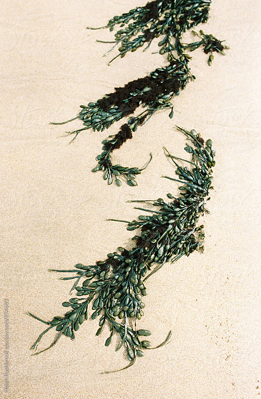 Seaweed on a beach by Helen Rushbrook for Stocksy United