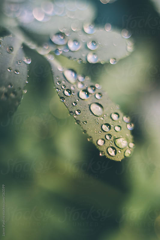 detail of a plants with water drops after de rain by Javier Pardina for Stocksy United