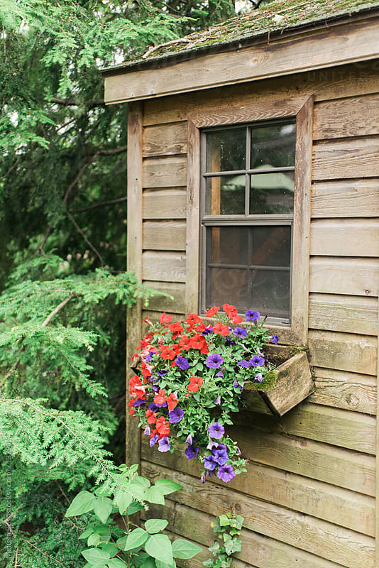 Flower box filled with red and purple petunias. by Melissa Ross for Stocksy United