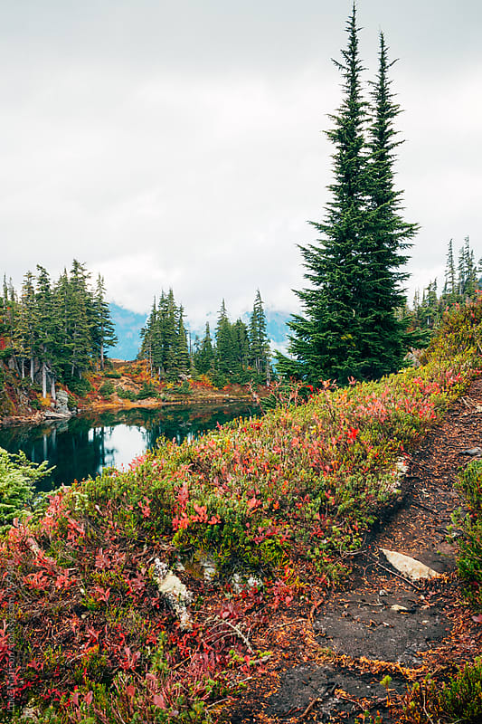 Forest Trail Climbing Up Slope Near Subalpine Lake by Luke Mattson for Stocksy United