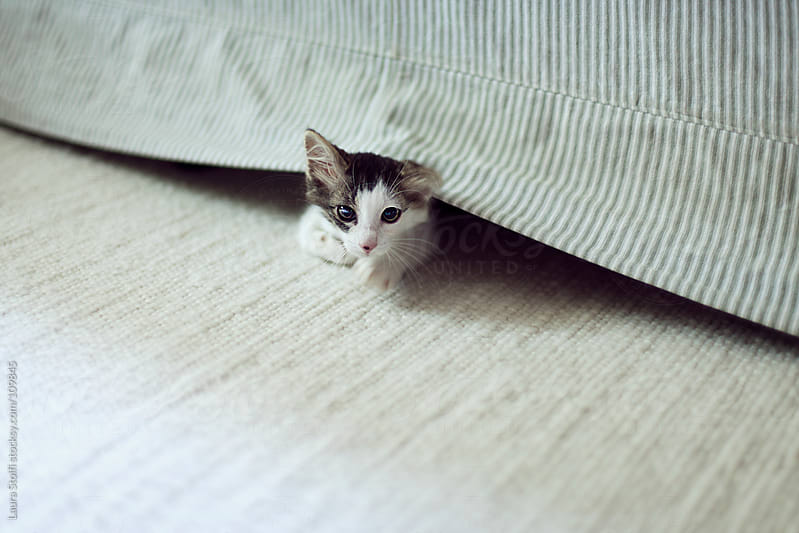 Kitten plays hide and seek and peers out from underneath a sofa by Laura Stolfi for Stocksy United