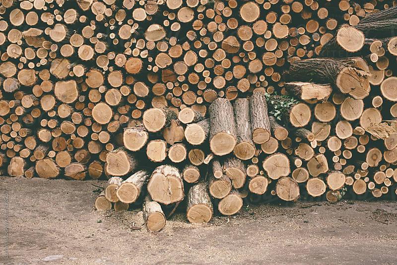 Woodpile by Lumina for Stocksy United