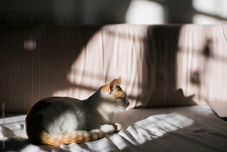 Side view of cat laying on unmade bed half in sun half in shadow by Laura Stolfi for Stocksy United