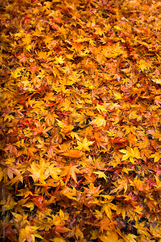 Autumn Leaves by Rowena Naylor for Stocksy United