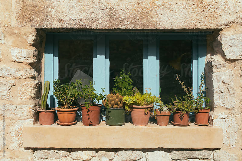 Plants on the window by Maja Topcagic for Stocksy United