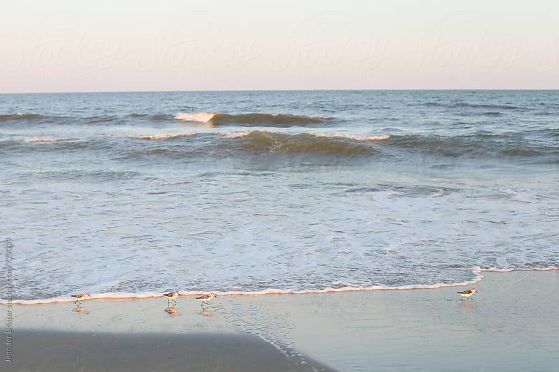 Little birds run along ocean by Jennifer Brister for Stocksy United