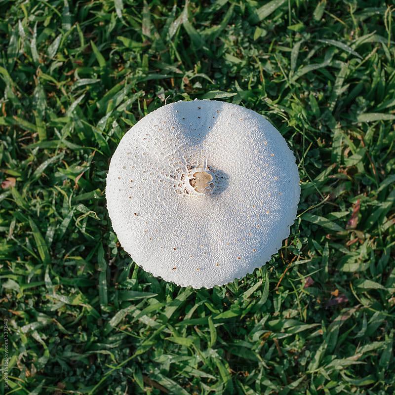 mushroom by jira Saki for Stocksy United