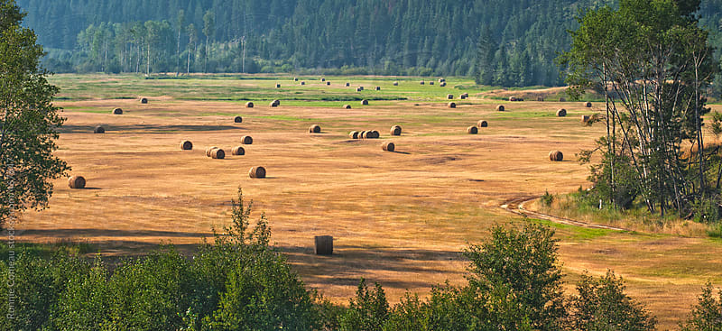Landscape With Rolls Of Hay by Ronnie Comeau for Stocksy United