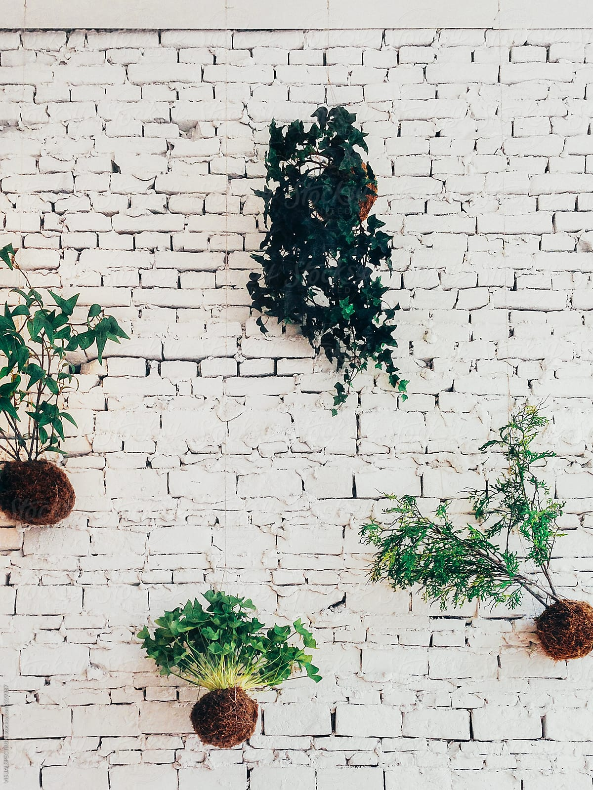Green Plants Hanging In Front Of White Brick Wall By Visualspectrum Stocksy United