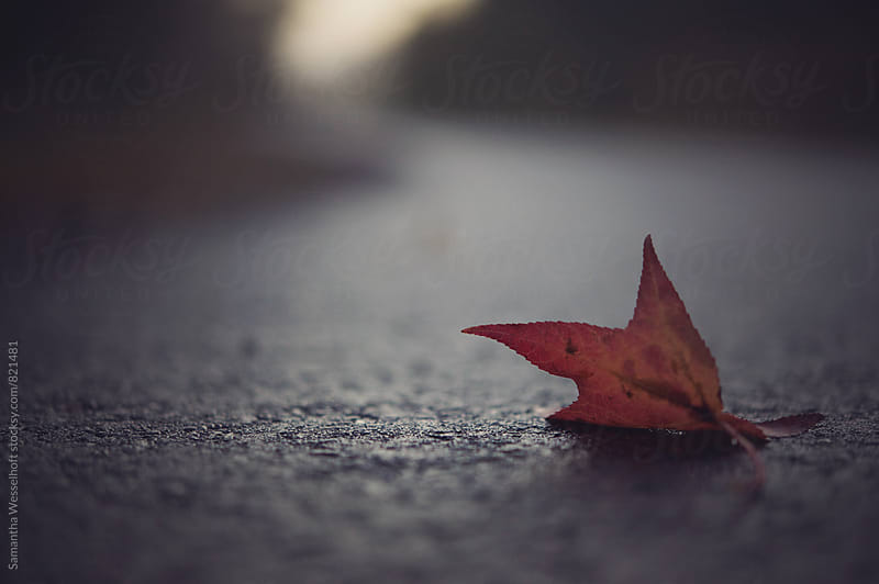 red leaf on pavement by Samantha Wesselhoft for Stocksy United