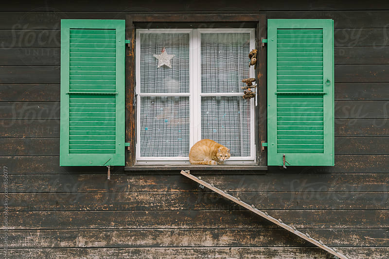 Cat on a window by MaaHoo Studio for Stocksy United