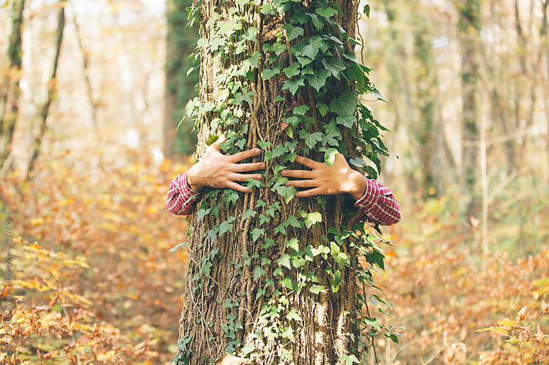 Hands embracing a tree by CACTUS Blai Baules for Stocksy United