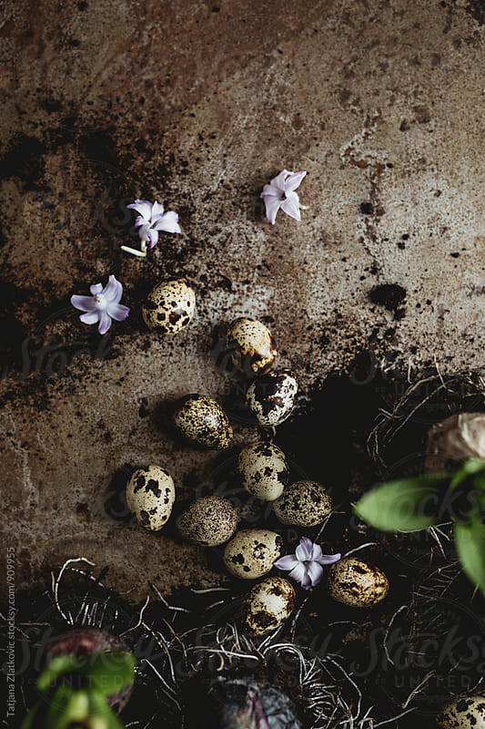 Quail eggs and hyacinth by Tatjana Ristanic for Stocksy United