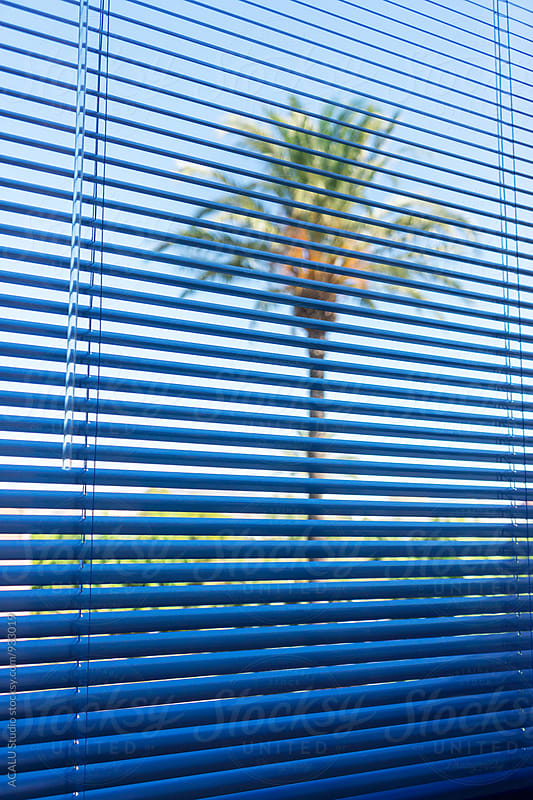 Palm tree through a window and blind by ACALU Studio for Stocksy United