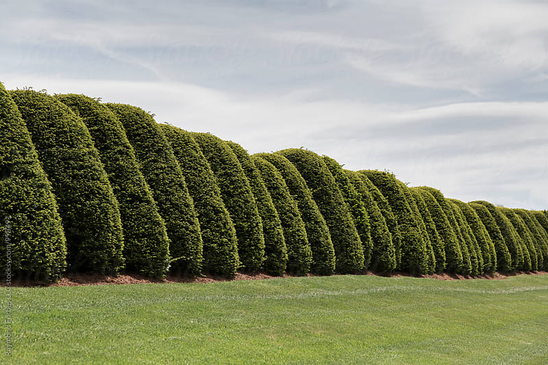 Cool Hedge I saw Yesterday by Raymond Forbes LLC for Stocksy United