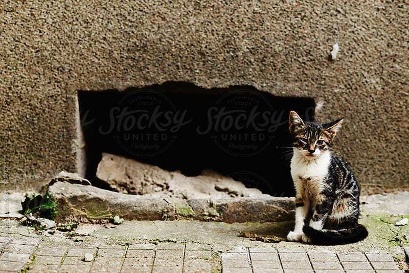 stray kitten by Atakan-Erkut Uzun for Stocksy United