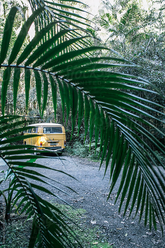 Campervan parked in Rainforest by Rowena Naylor for Stocksy United