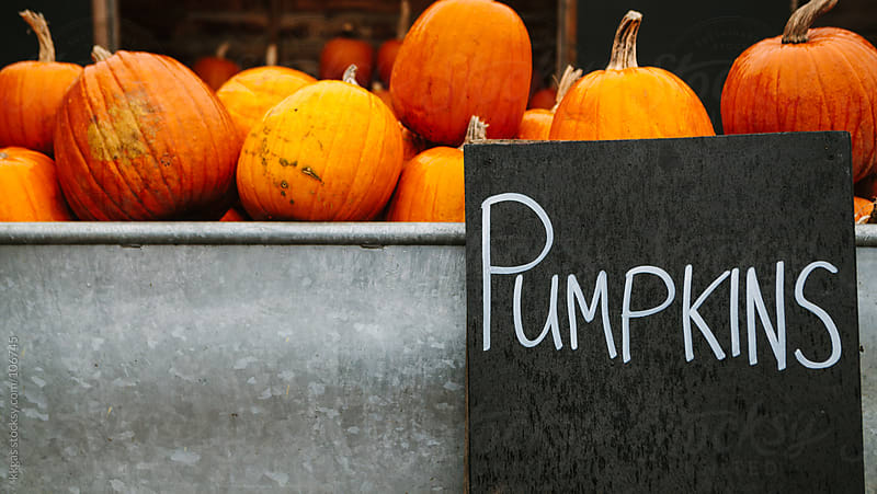 Pumpkin sign with pumpkins for sale by kkgas for Stocksy United