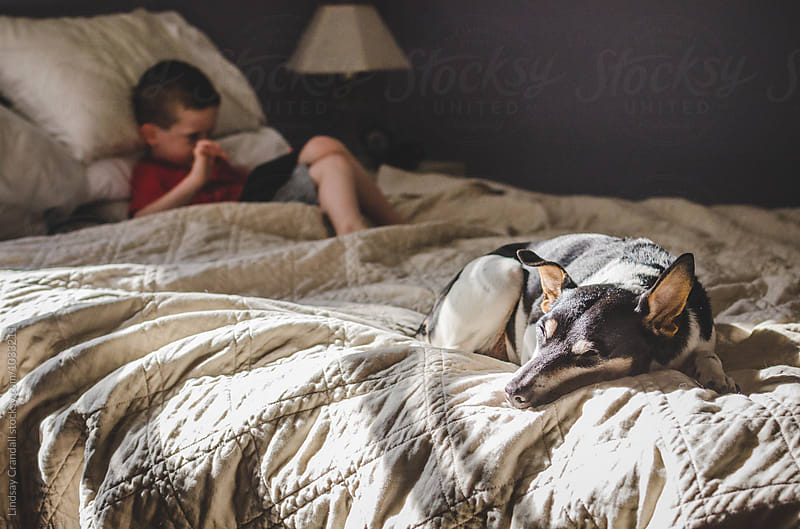 Dog lying on bed in sunshine with little boy playing on electronic device by Lindsay Crandall for Stocksy United