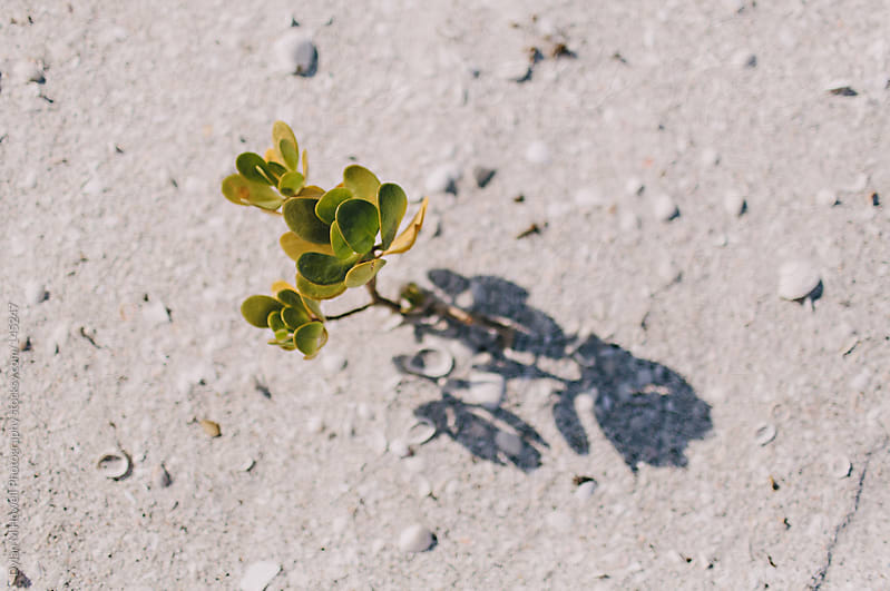 little plant on the beach by Dylan M Howell Photography for Stocksy United